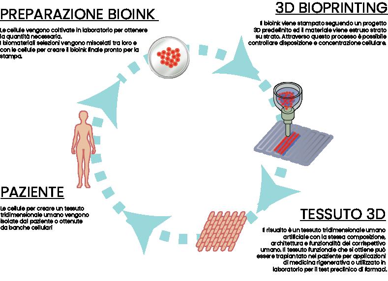 infografica-3d-bioprinting-come funziona