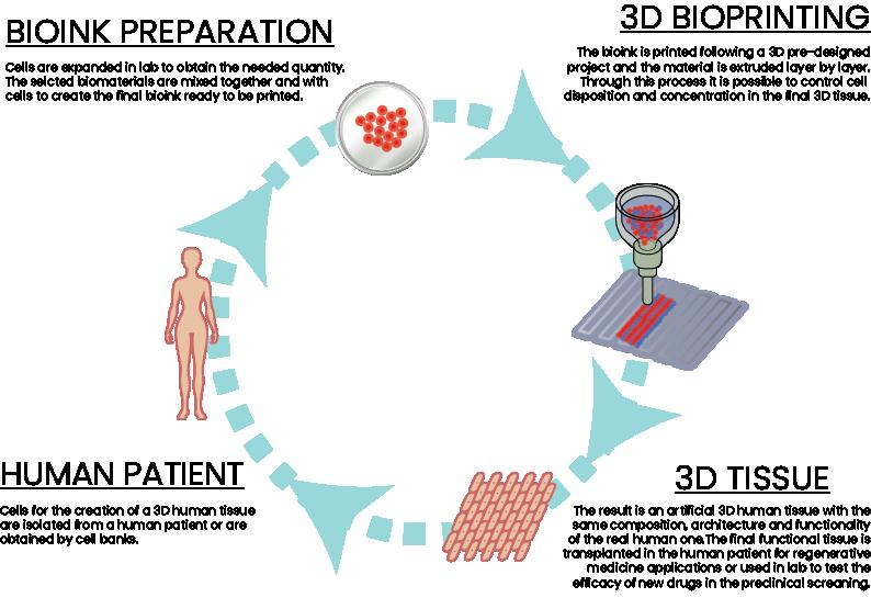 3dbioprinting, Prometheus