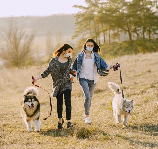 Covid19-walk-dog-animal care-