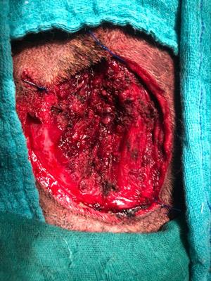 After the debridement phase, a moist environment helps healing